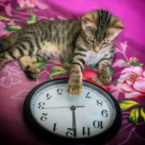 Chat et horloge